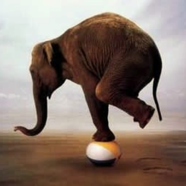 Photographies affiches images elephant equilibriste img