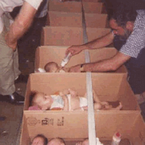 Babies in boxes 3 v2 orig