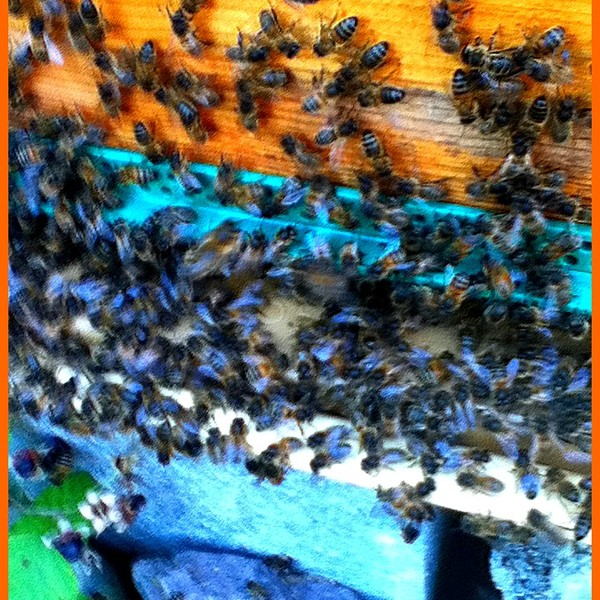 Color abeilles