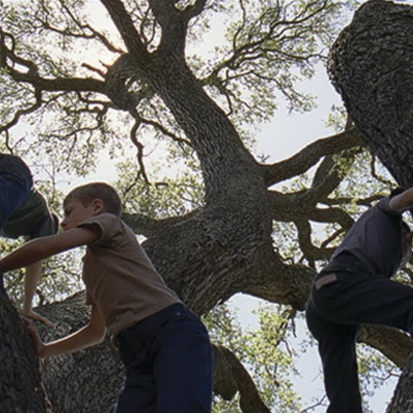 Movie tree of life 20112b 2bterrence2bmalick www lylybye blogspot com