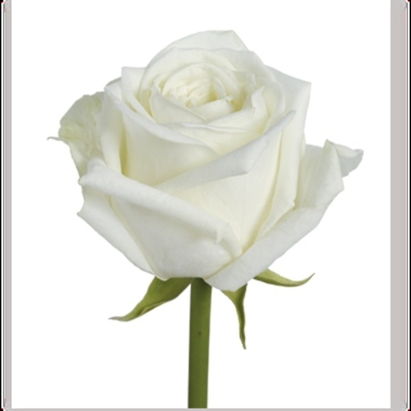 WeLoveWords - Une fleur blanche par juliesma