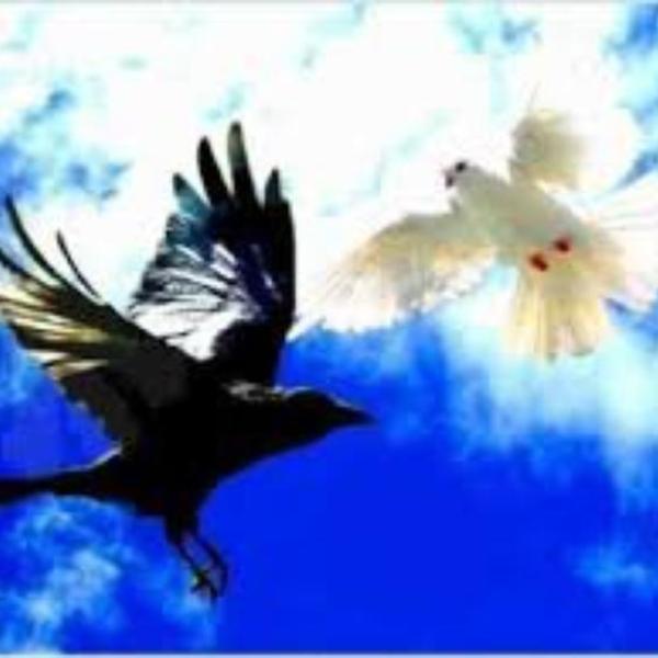 soprano le corbeau et la colombe