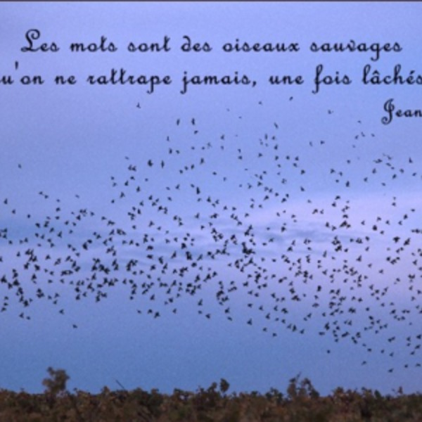 Mots sauvages