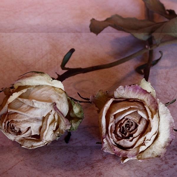 Welovewords Fleur Fanee Par Sansa