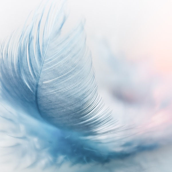 Feather 3010848