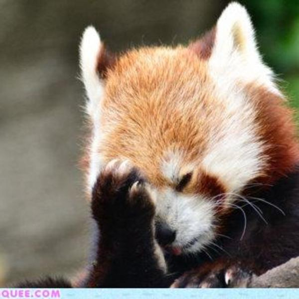 Fox facepalm
