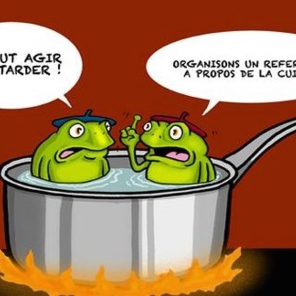 Cuisson grenouille